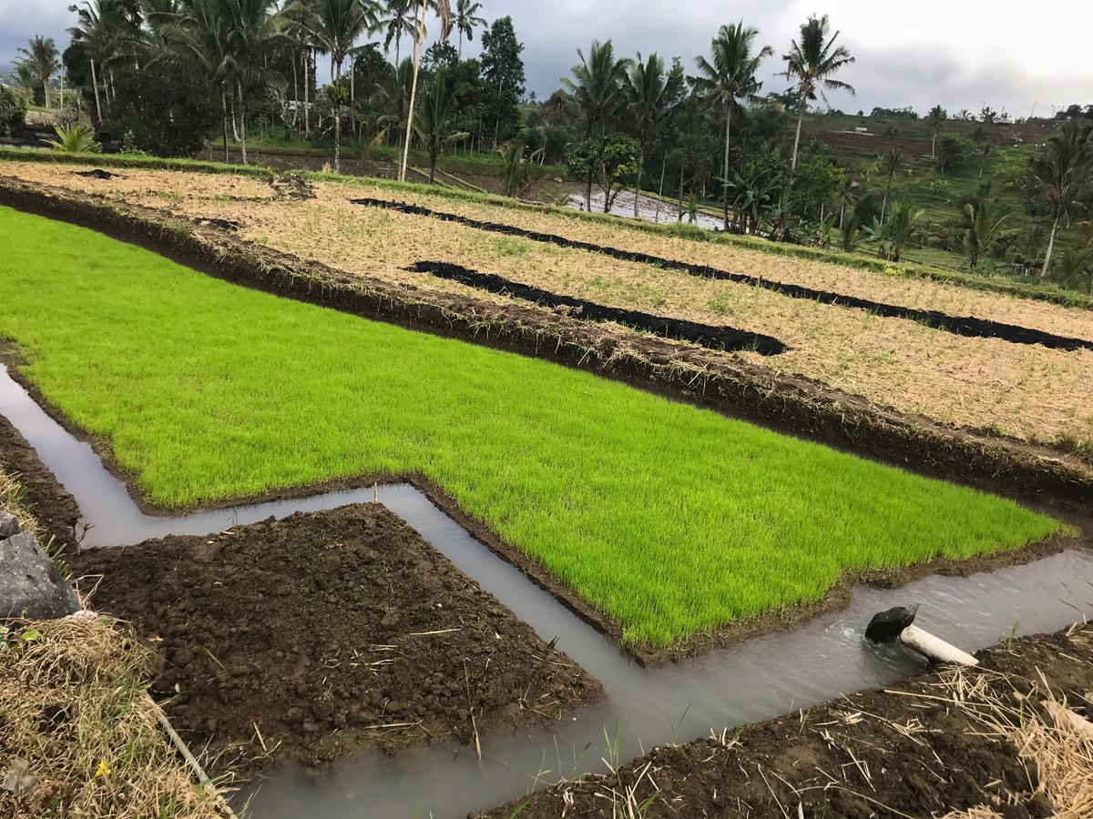 Indonésie Bali Jatiluwih rizières culture