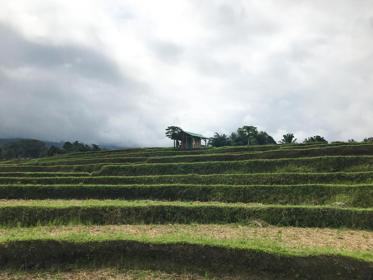 Indonésie Bali Jatiluwih rizières cabane