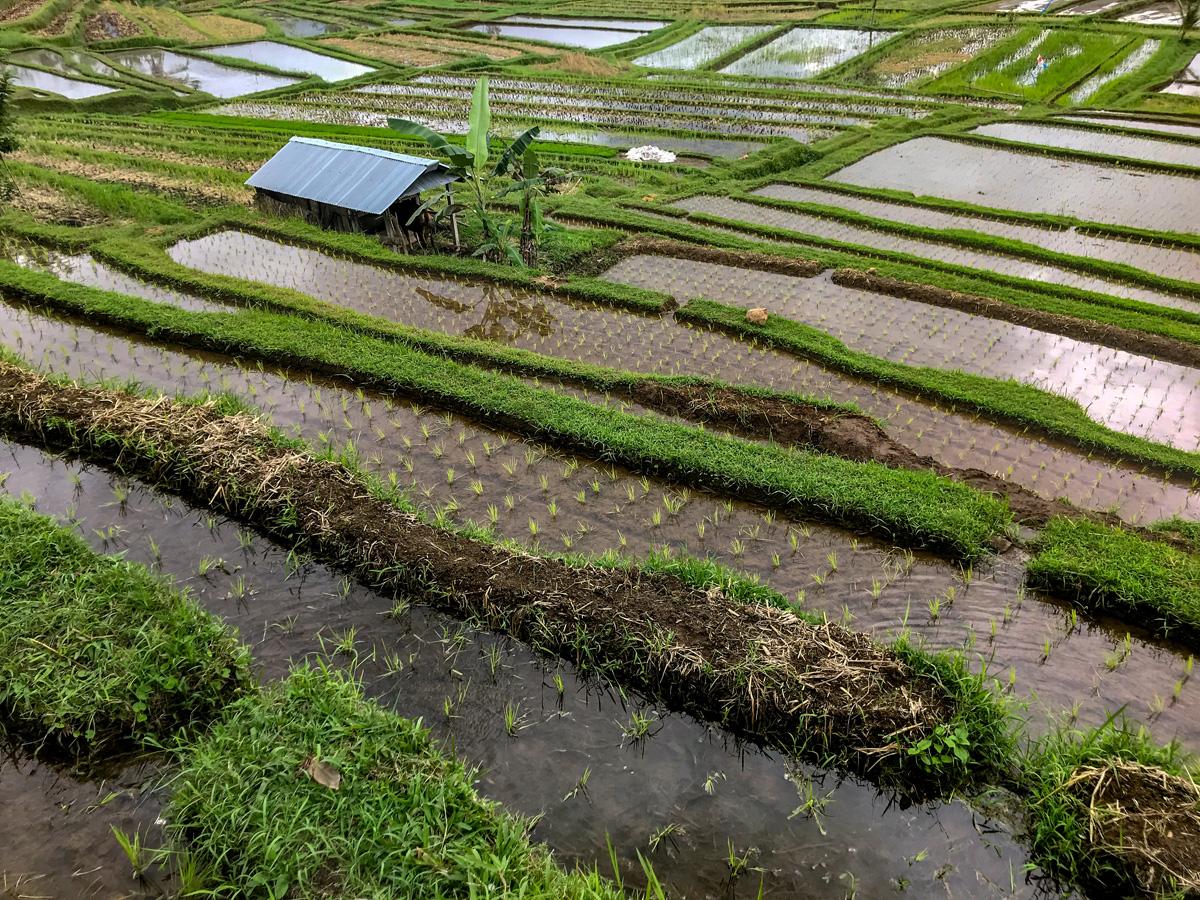 Indonésie Bali Jatiluwih rizières sudak
