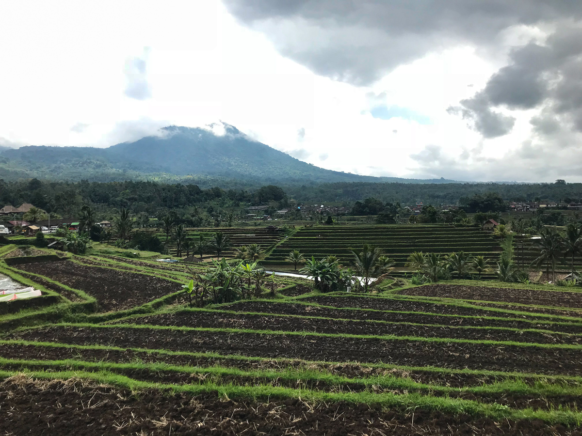 Indonésie Bali Jatiluwih rizières panorama