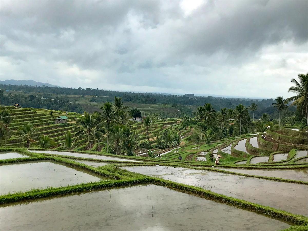 Indonésie Bali Jatiluwih rizières