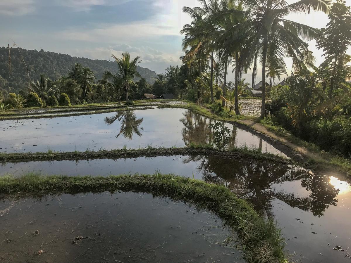 Indonésie Bali Munduk voyage montagne cascade waterfall rizière