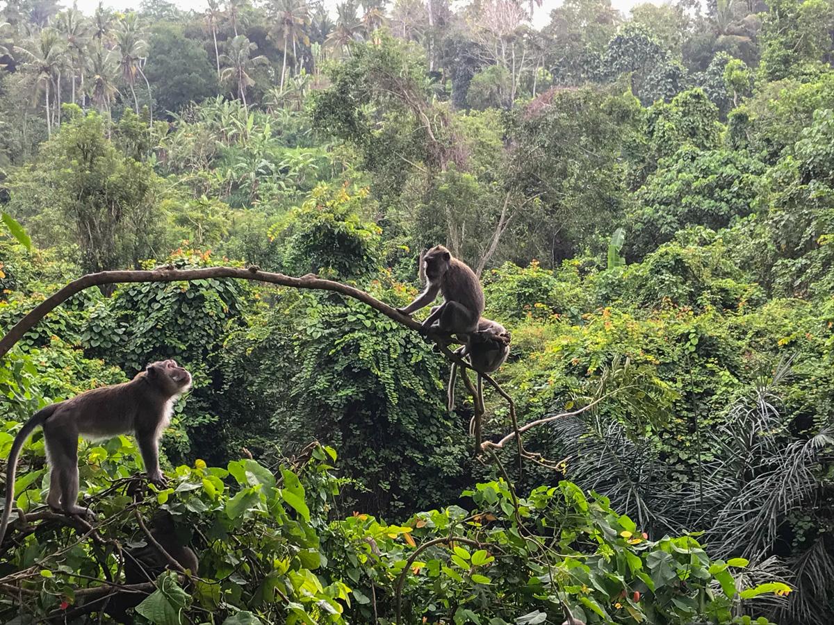 Ubud Indonésie Bali voyage monkey forest singe