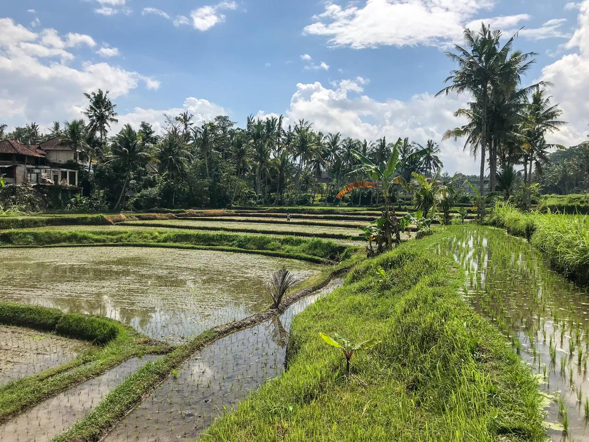 Ubud Indonésie Bali voyage Rizière Yeh Pulu