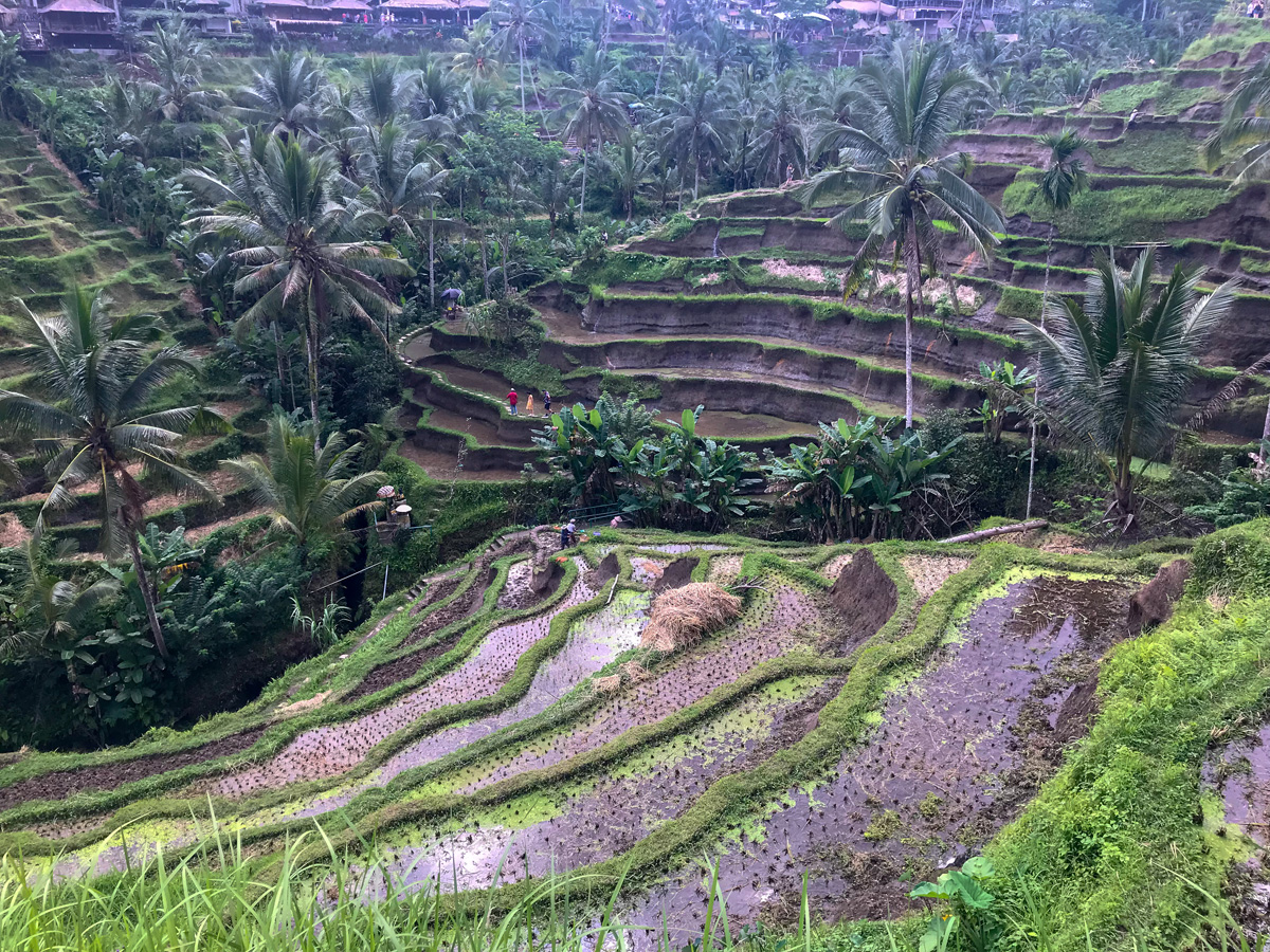 Ubud Indonésie Bali voyage rizières Tellalang