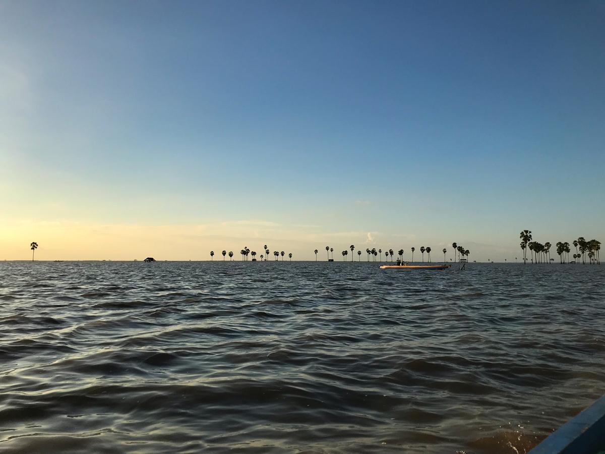 Tempe Lac Sulawesi Indonésie palmiers