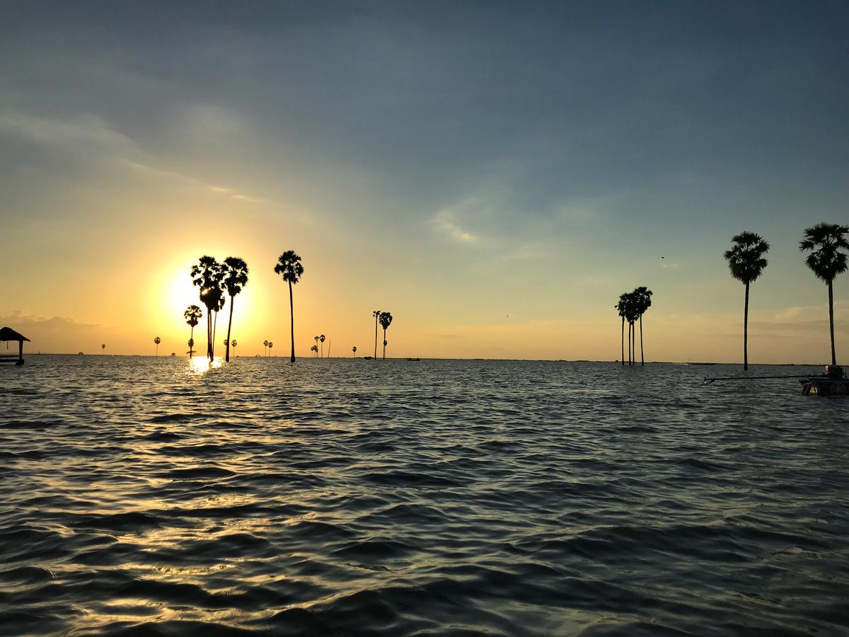 Tempe Lac Sulawesi Indonésie palmier sunset