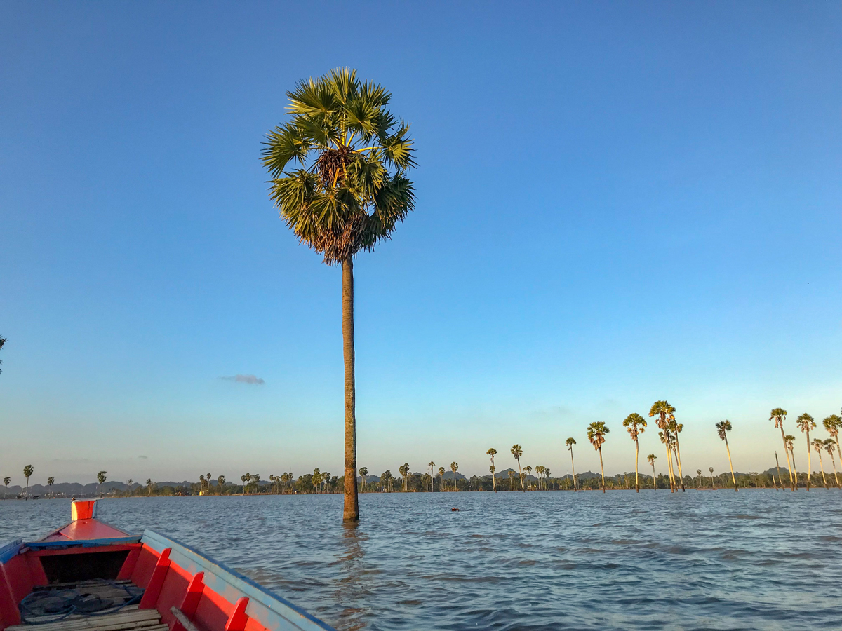 Tempe Lac Sulawesi Indonésie palmier
