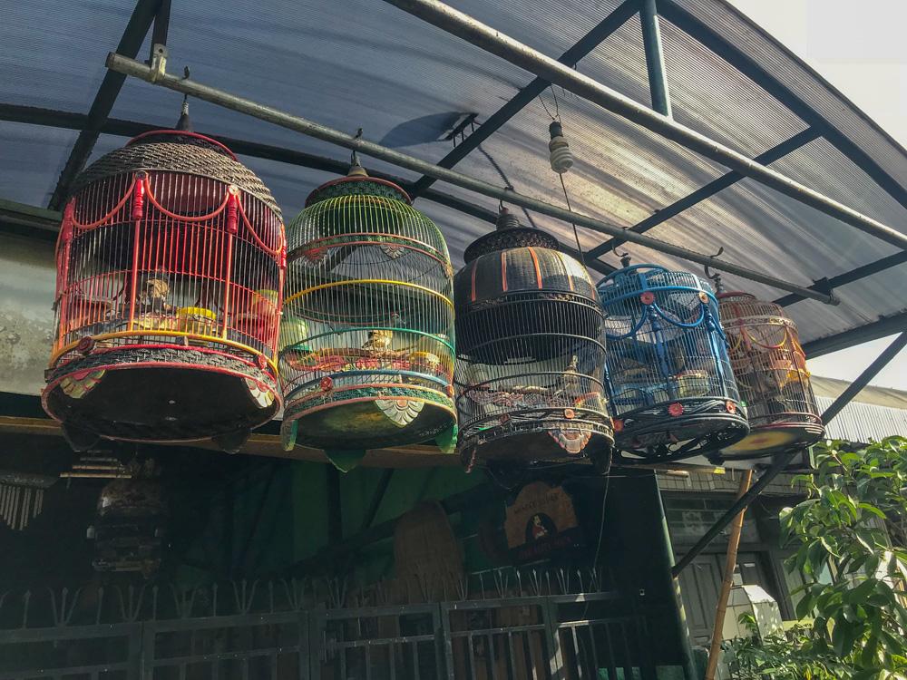 Yogyakarta Java Indonésie oiseau kraton blog voyage