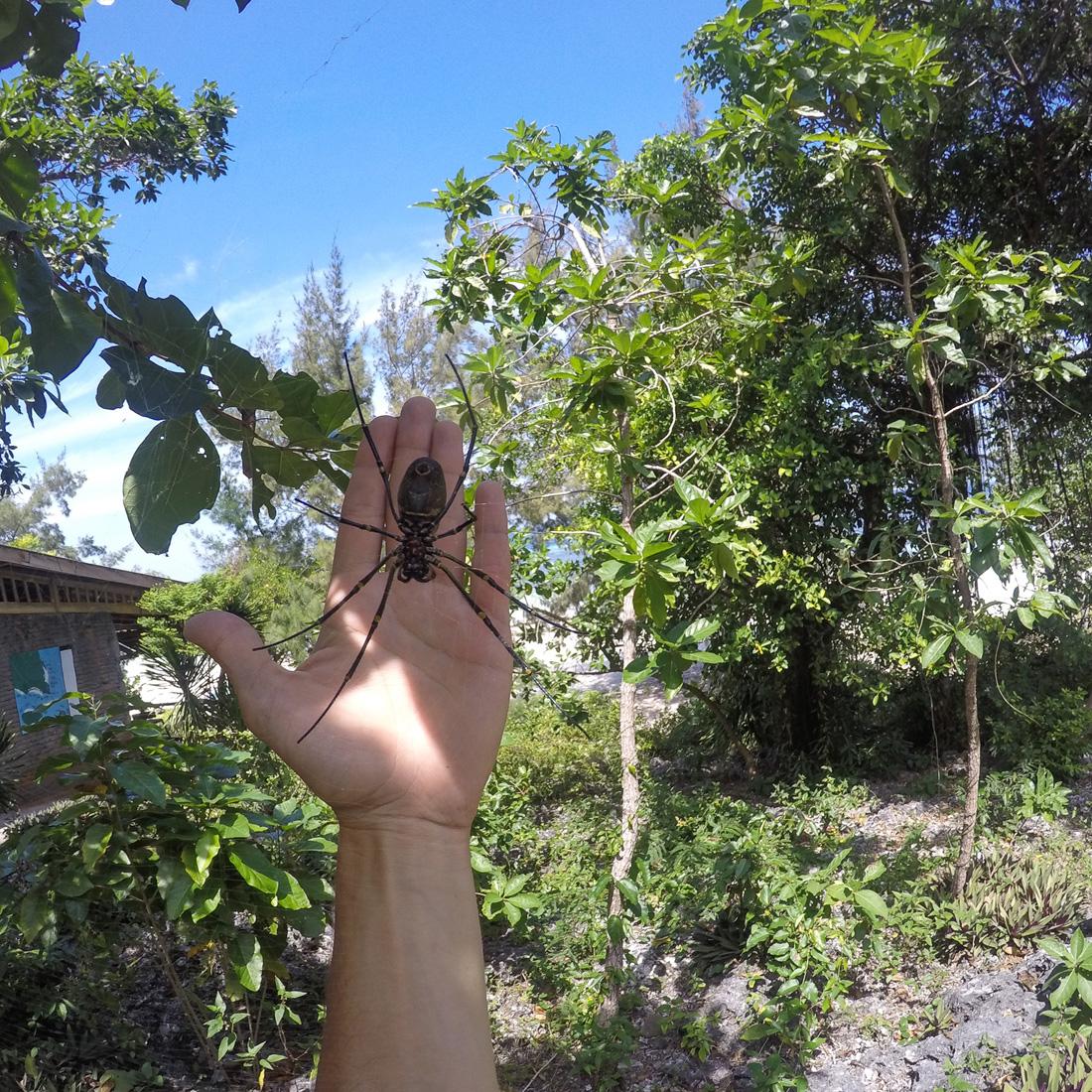 Pantai Bira Sulawesi Indonésie araignée