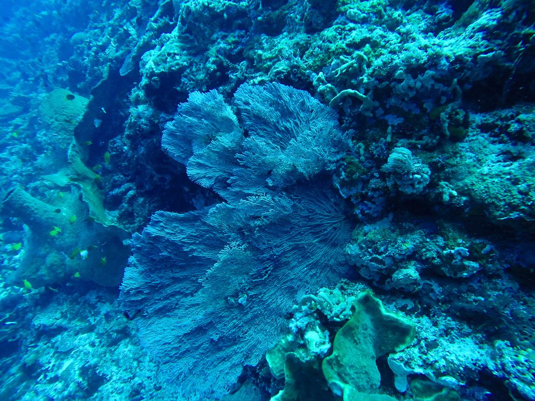 Pantai Bira Sulawesi Indonésie Corail Plongée