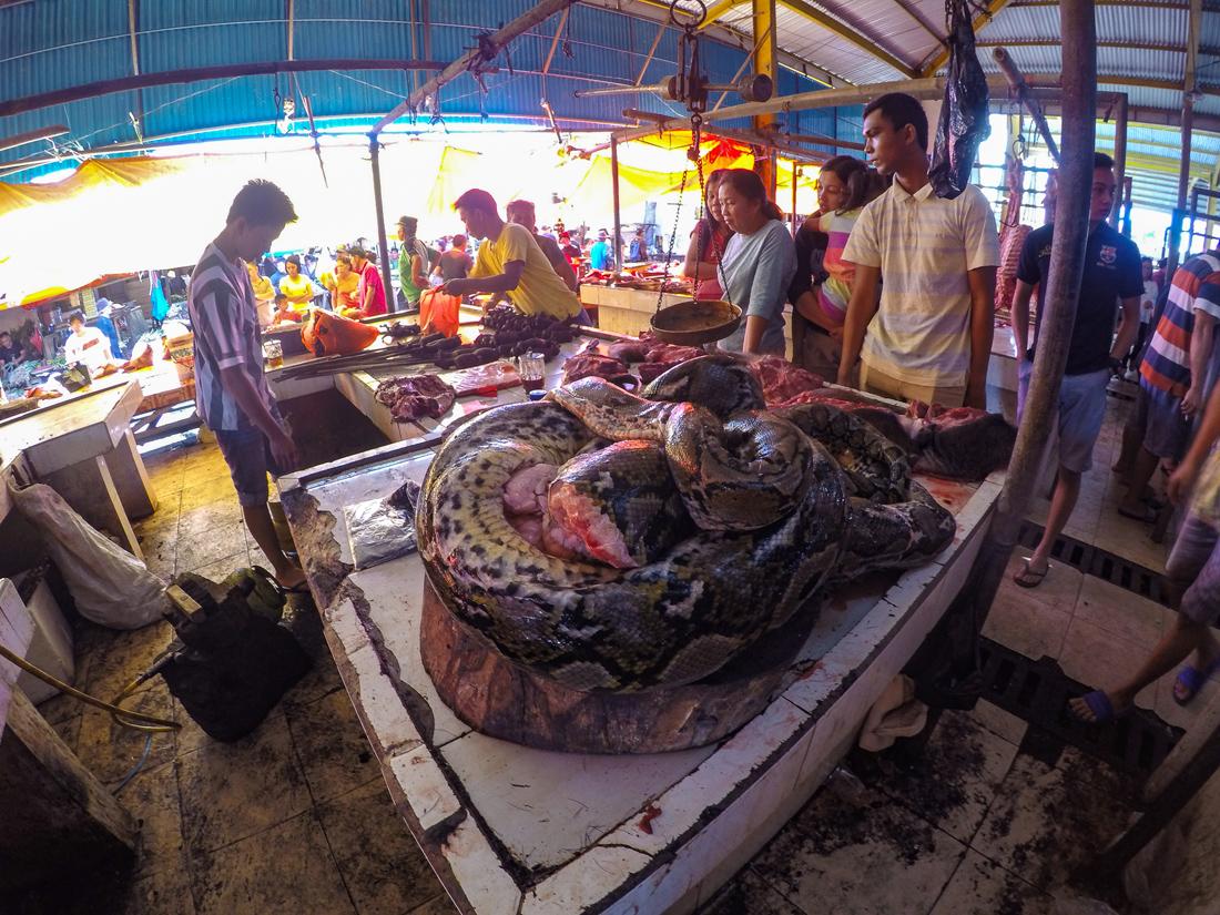 Tomohon Sulawesi Indonésie Marché serpent