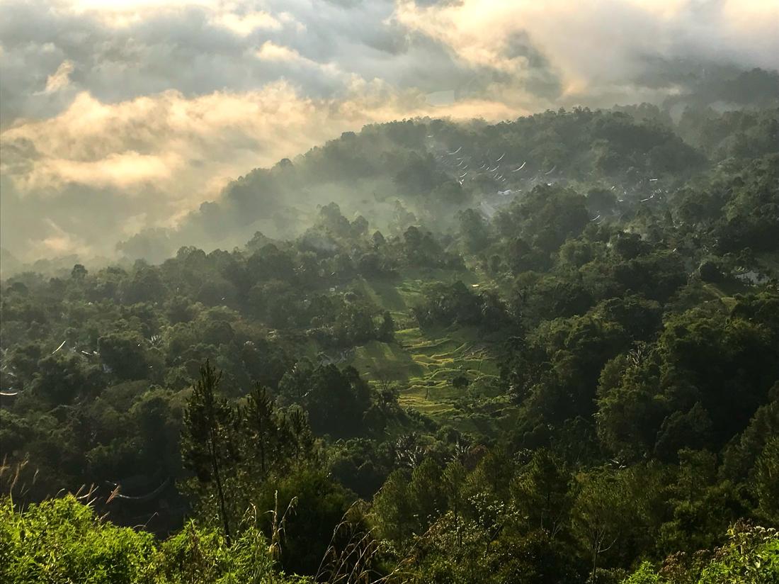 Sulawesi Indonésie Toraja Lolai Forêt