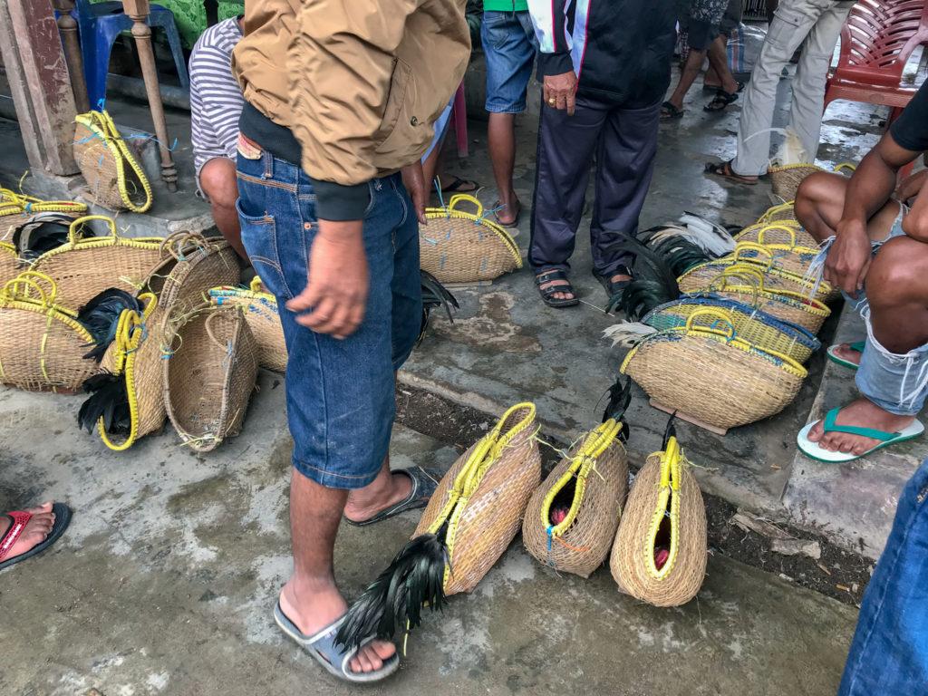 Sulawesi Indonésie Toraja Pasar Bolu Coq