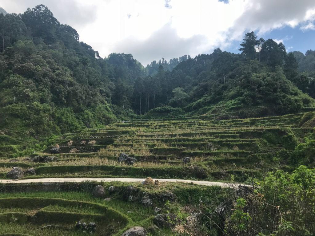 Sulawesi Indonésie Toraja Rizières