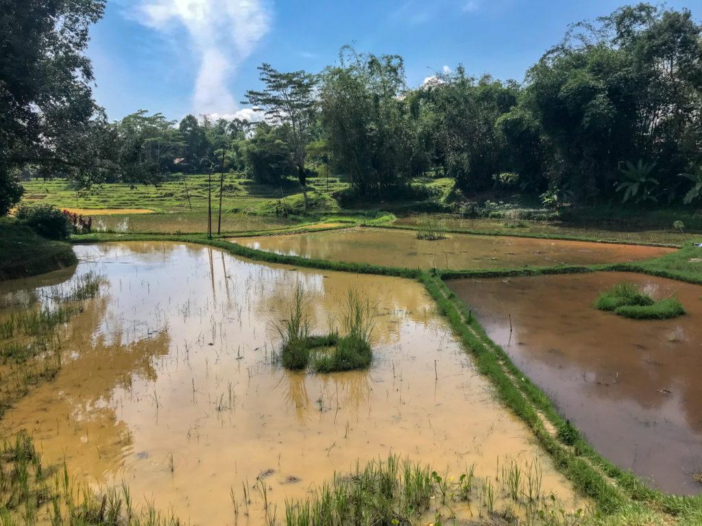 Sulawesi Indonésie Toraja Rizières eau
