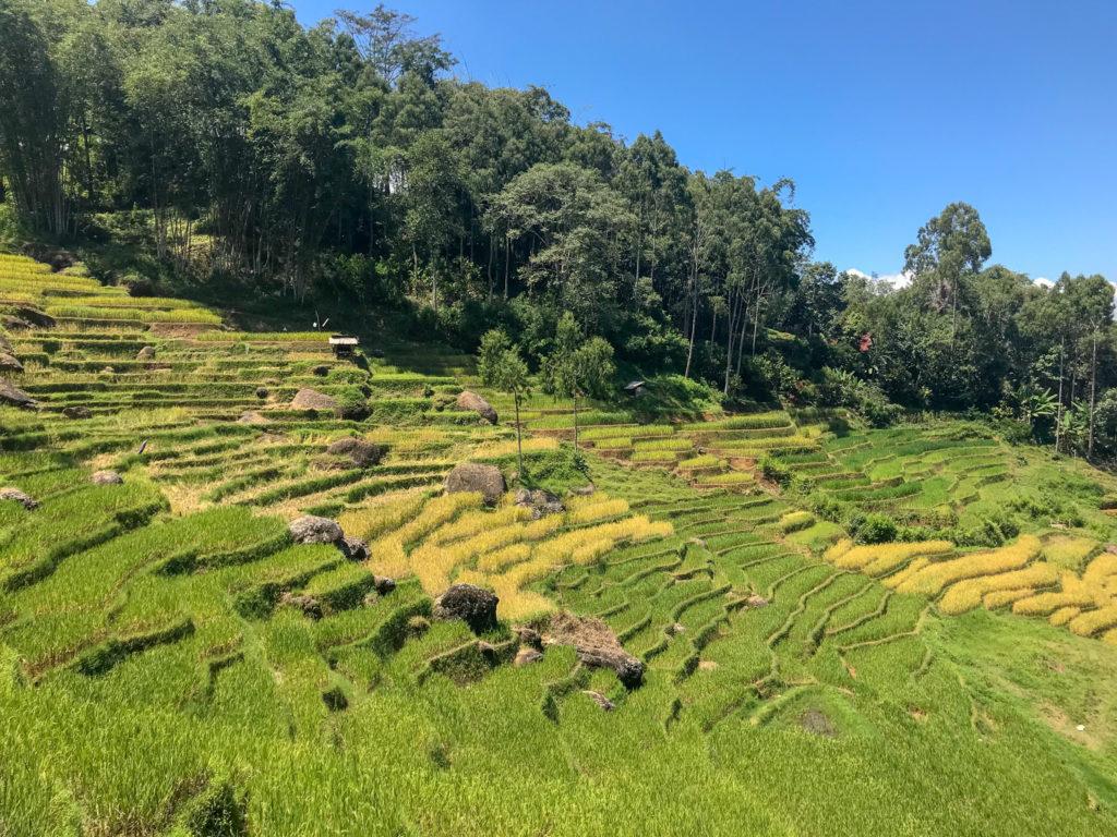 Sulawesi Indonésie Toraja Trek Rizières