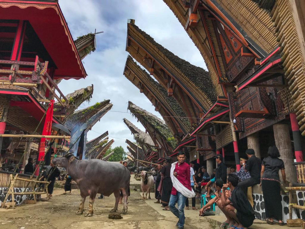Sulawesi Indonésie Toraja Site cérémonie buffles