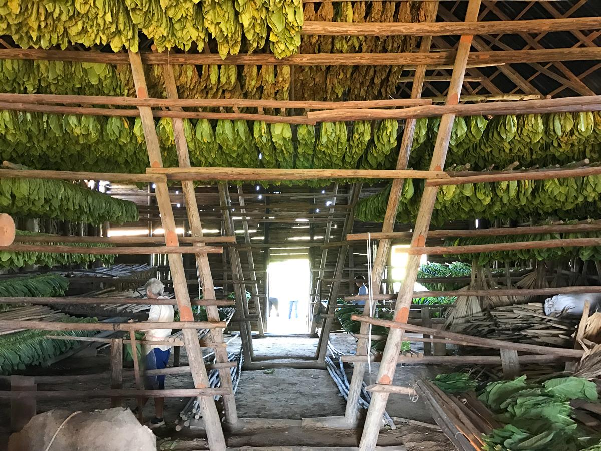 Séchoir d'une ferme de tabac à Vinales