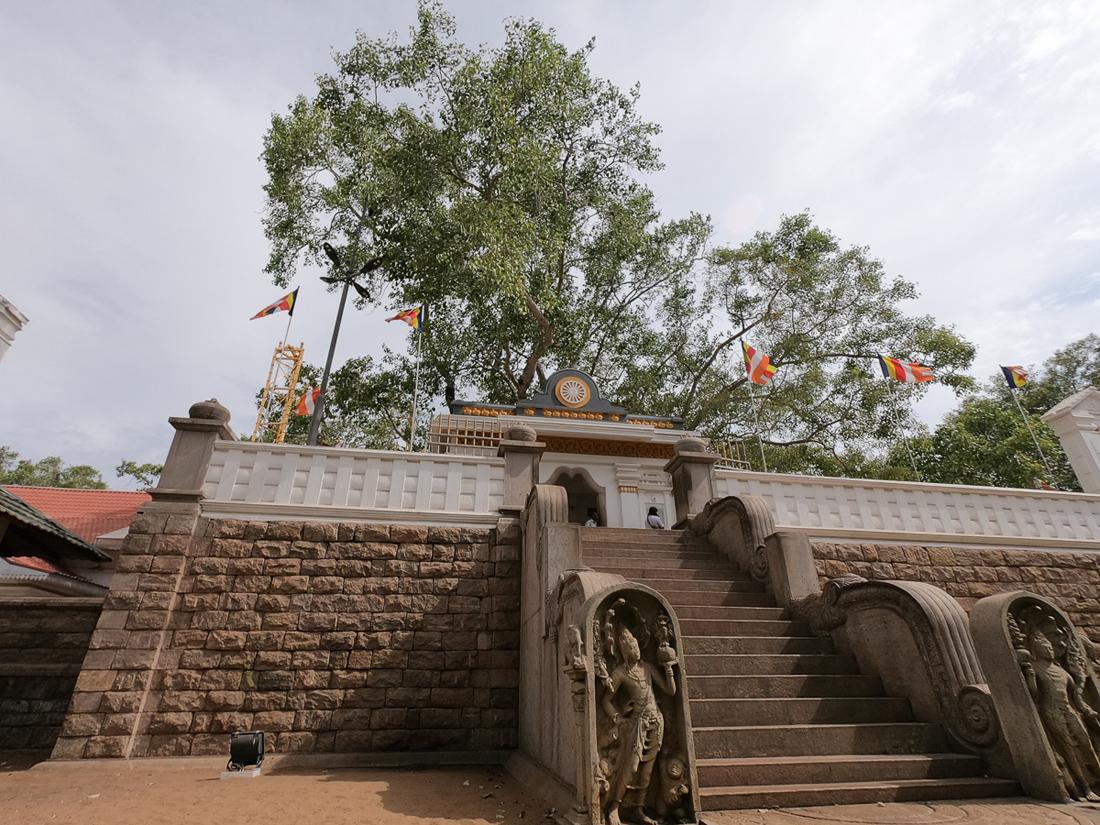 Sri Lanka Anuradhapura Bodhi Tree