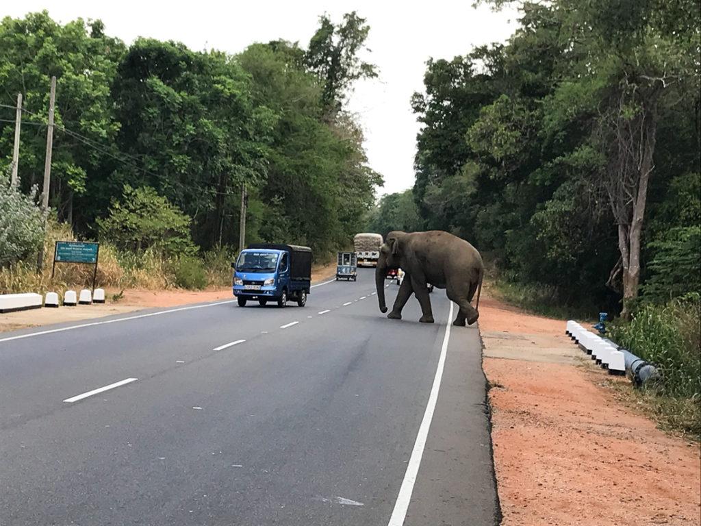 Sri Lanka Dambulla Elephant sauvage Route