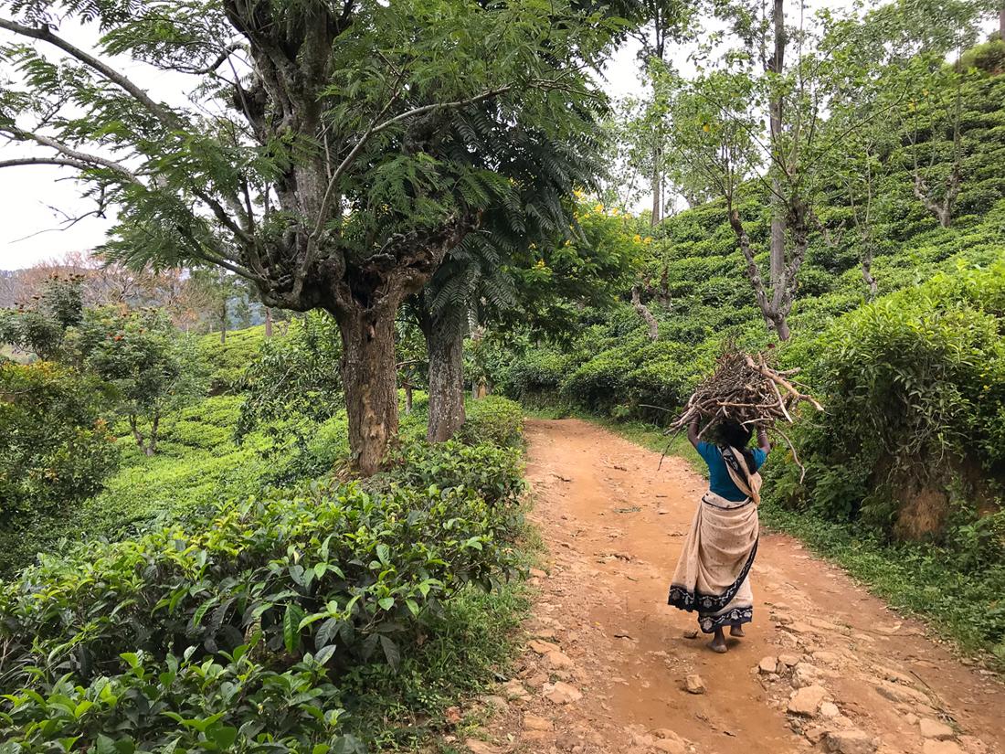 Sri Lanka Ella Little Adam's Peak Femme