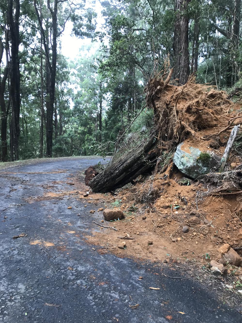 Sri Lanka Horton Plains Arbre Tempête