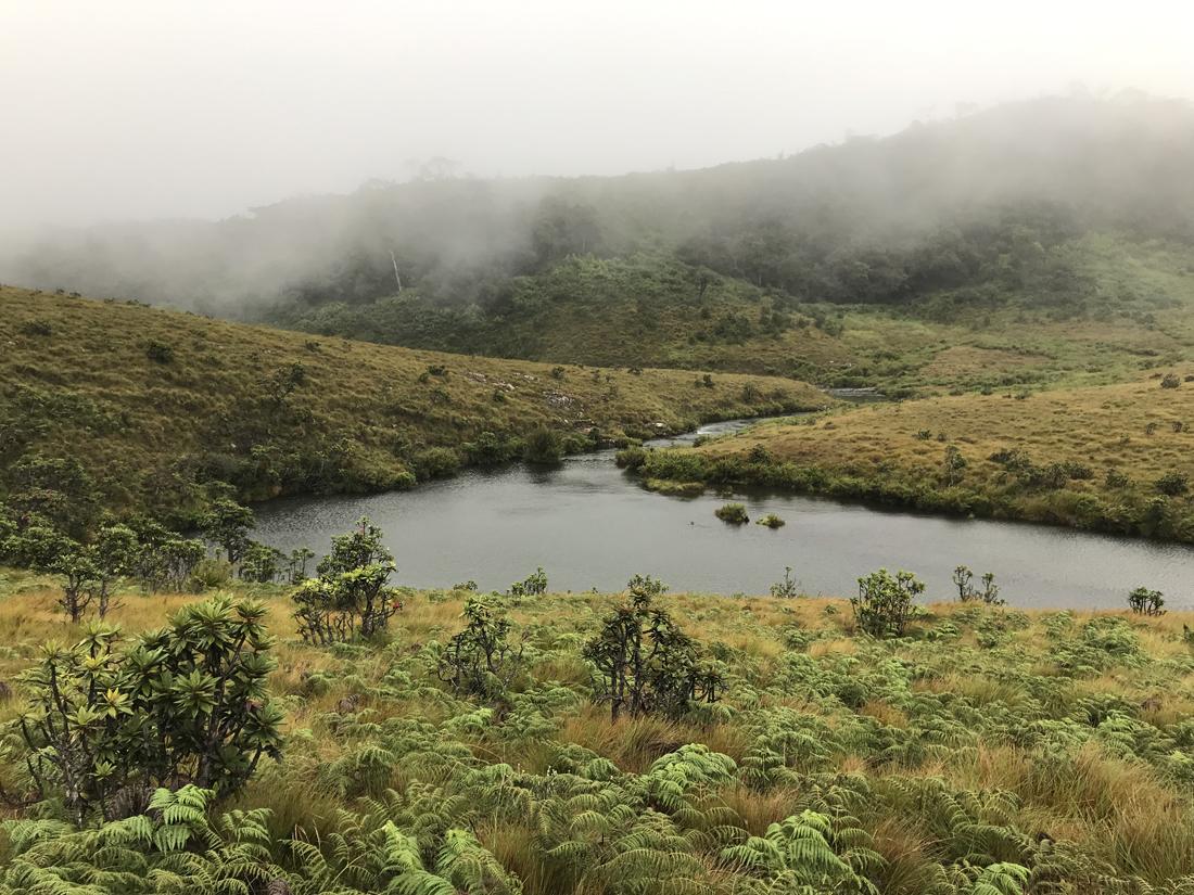 Sri Lanka Horton Plains Rivière