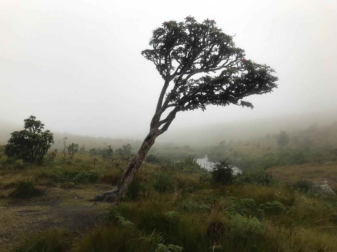 Sri Lanka Horton Plains Arbre