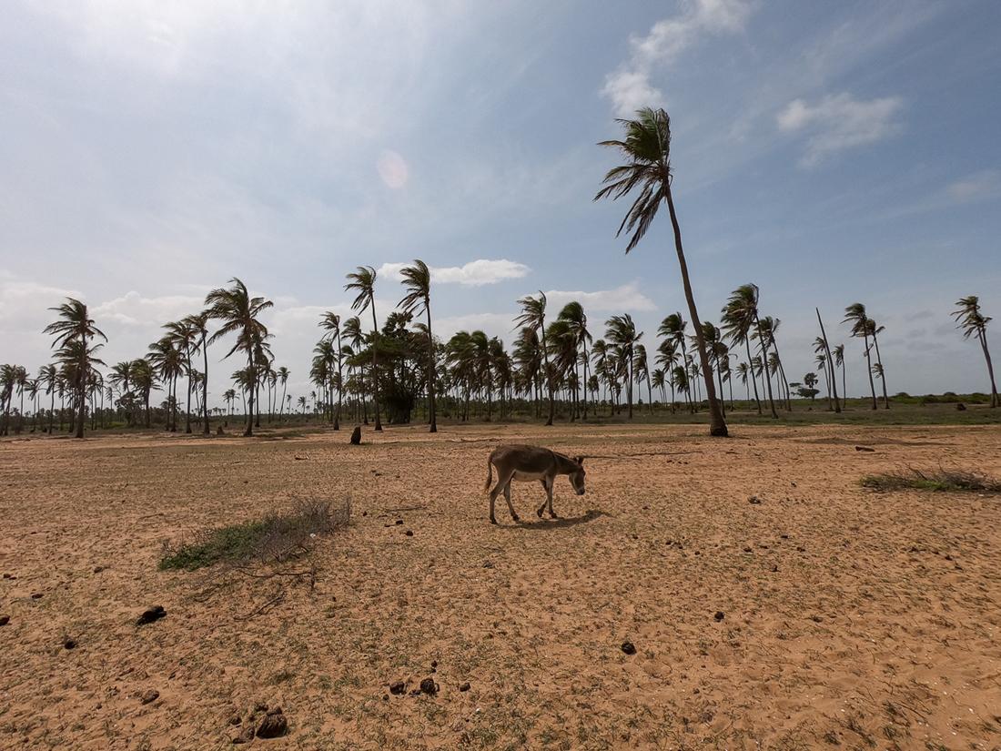 Sri Lanka Kalpitiya Kandakuli Plage Ane