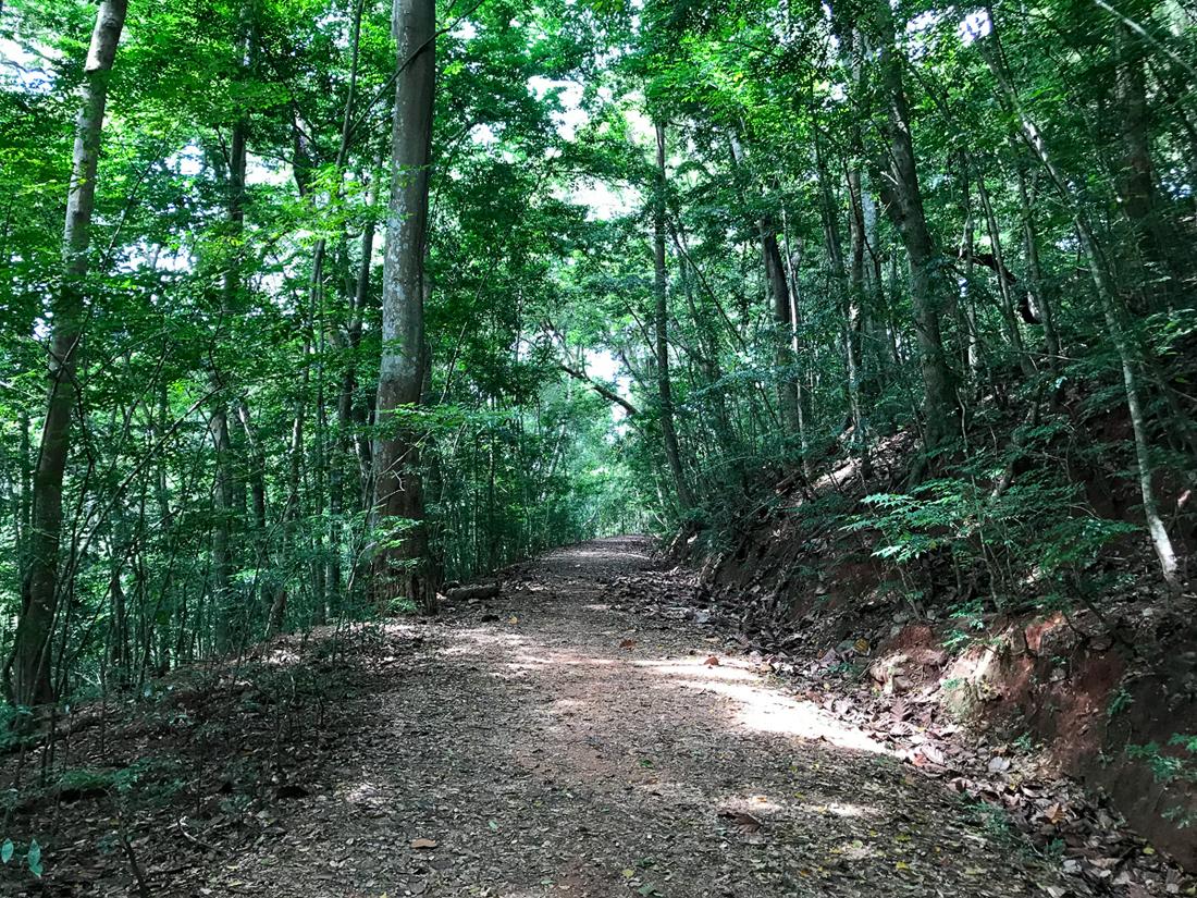 Sri Lanka Kandy Forêt
