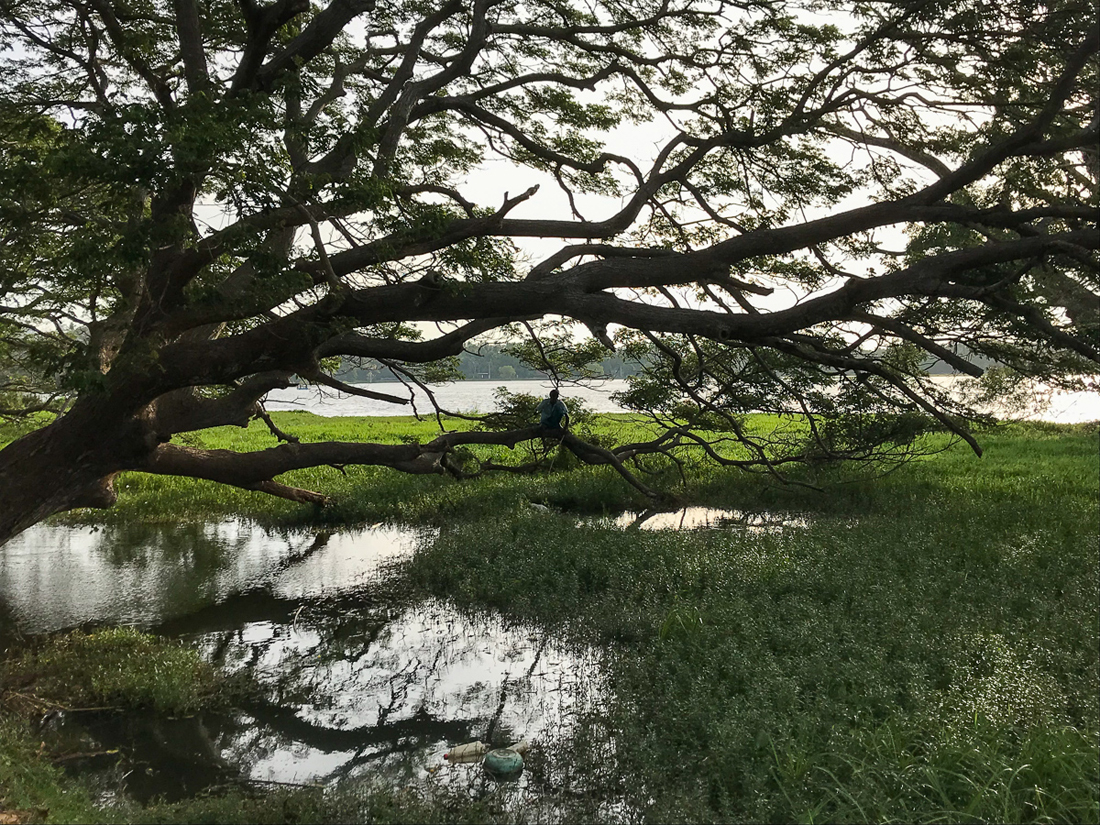 Sri Lanka Thissamaharama Lac Arbre Pêcheur