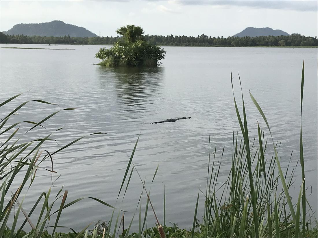 Sri Lanka Thissamaharama Lac Crocodile Animail