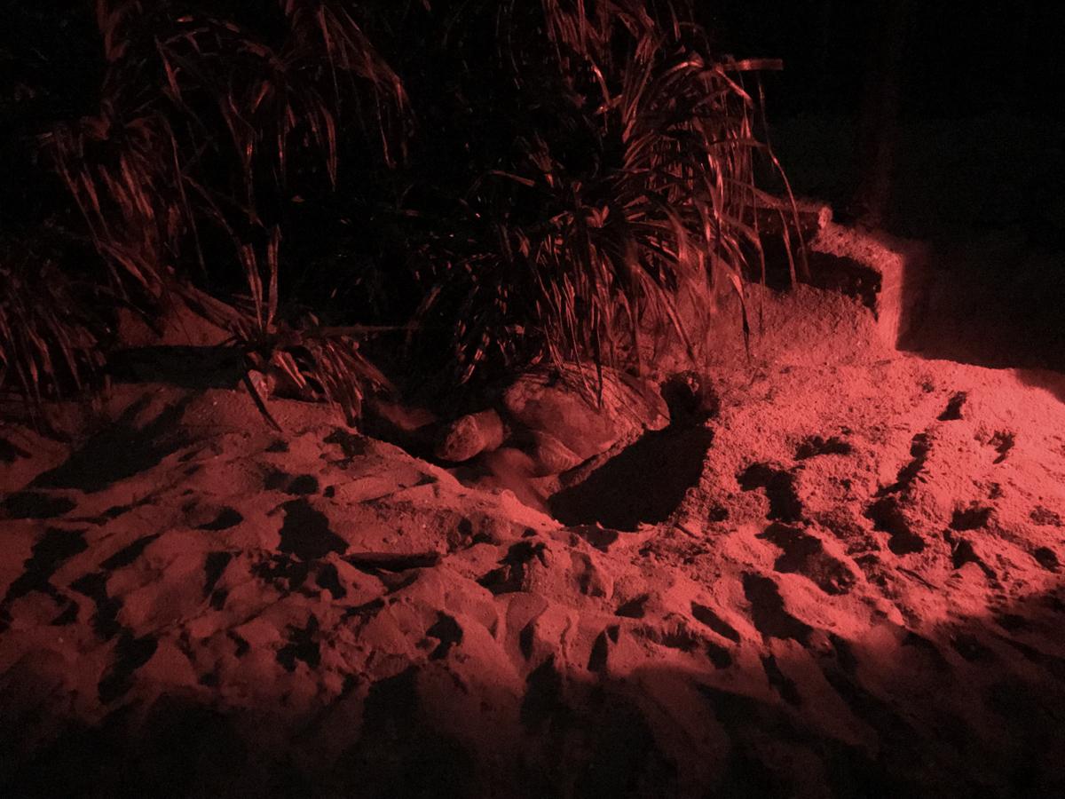 Sri Lanka Rekawa Tortue Ponte Nuit Turtle watch