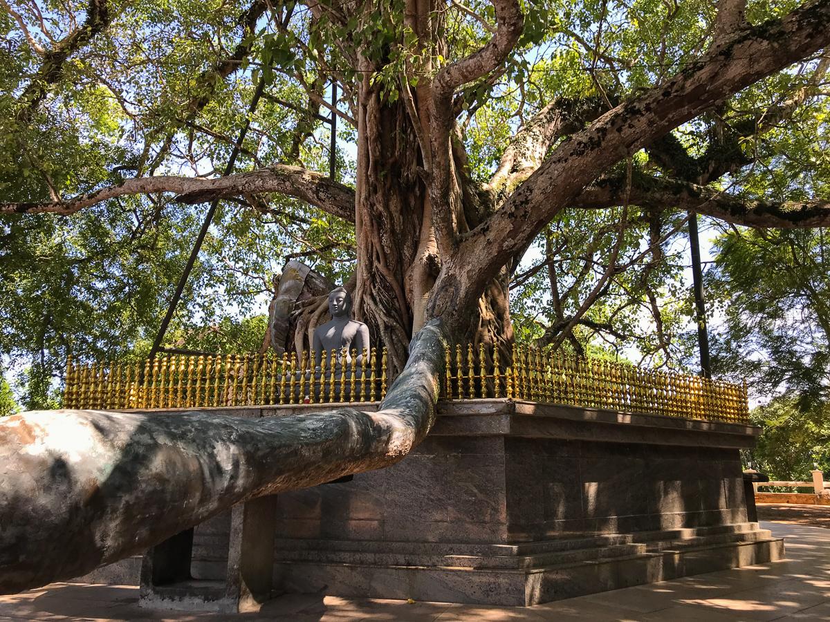 Sri Lanka Unawatuna Yatagala Temple Bodhi Tree
