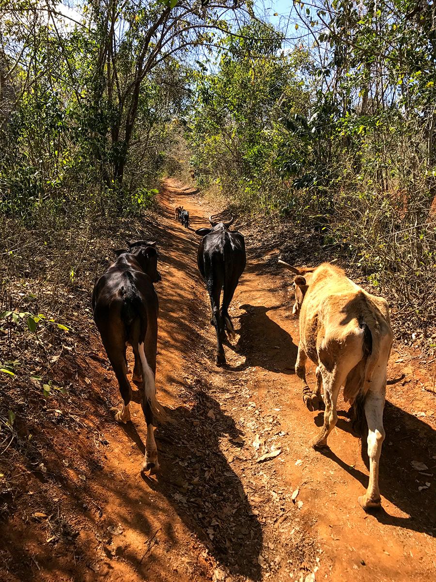 Animaux qui marchent sur un chemin